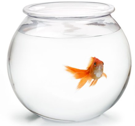 pesce-boccia